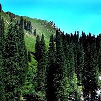 科桑溶洞国家森林公园