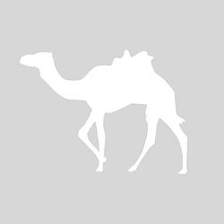松鼠咔咔探索乐园