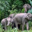 西双版纳热带雨林自然保护区