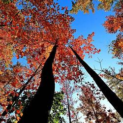 德保红叶森林公园