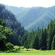 吐鲁沟国家森林公园优惠人群票