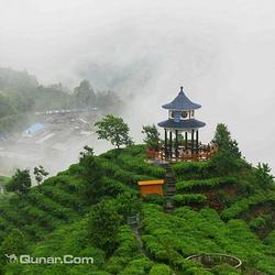 青岛茶山景区