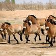 神州荒漠野生动物园