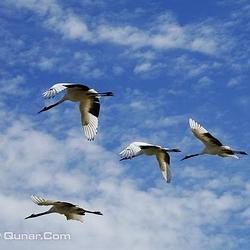 扎龙自然保护区