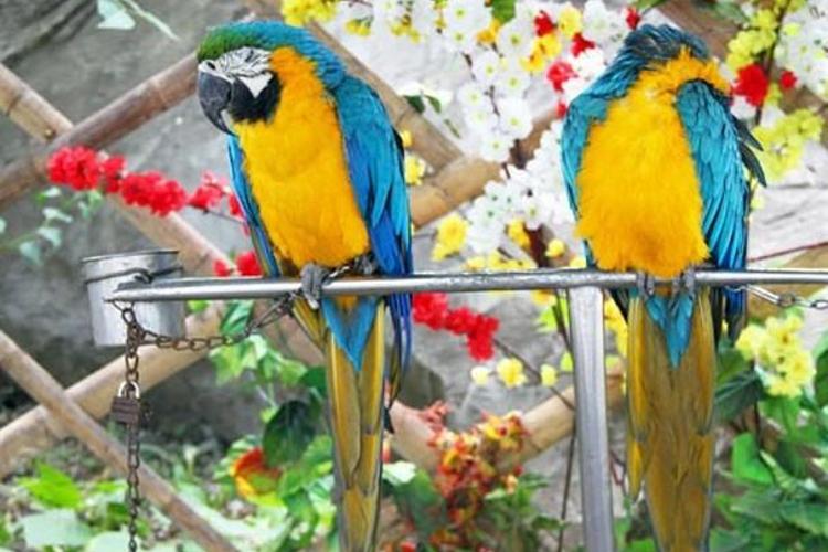 哈尔滨鸟语林动物园旅游
