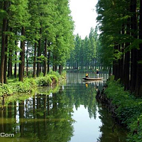 李中水上森林公园