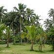 兴隆热带花园