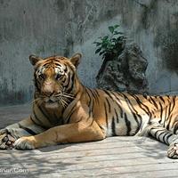 虎居动物园