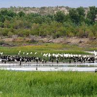 艾比湖湿地