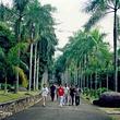 兴隆热带雨林观赏区