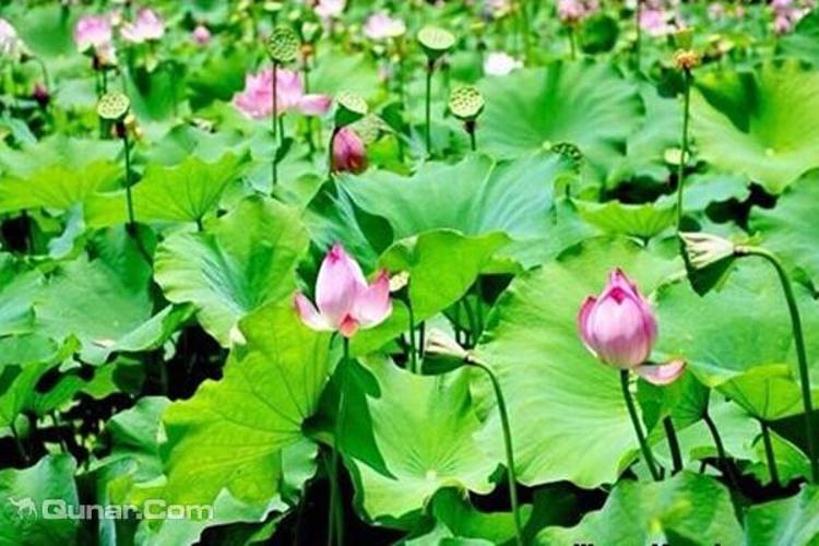 荷塘生态旅游区旅游