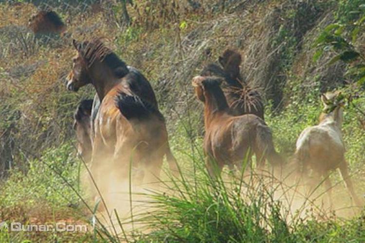 南宁绿野马场旅游