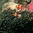 圣亚珊瑚世界