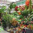曹庄花卉市场