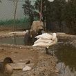 胜利天鹅湖动物园