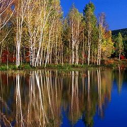 溪水国家森林公园