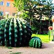 赤峰市植物园