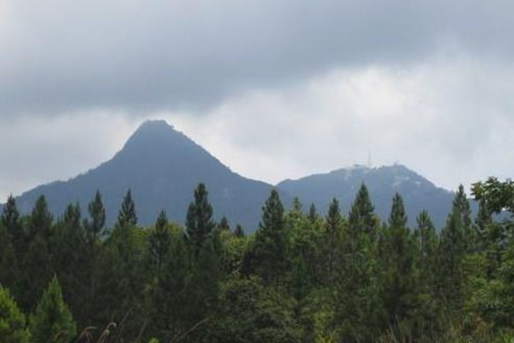 杨莫岭森林公园旅游