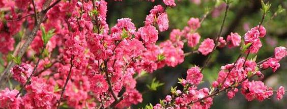 春意渐浓赏花季
