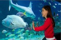 墨尔本2景点套票(墨尔本水族馆门票+尤里卡塔观景台门票)