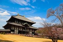 日本自由行 大阪-奈良10小时包车往返 5座/7座/10座可选