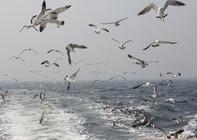 山东长岛两日游,宿美杰渔家,游万鸟岛鸟的世界、玩赶海园拔蟹笼