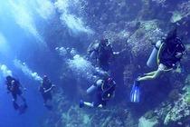 涛岛 潜水员OW考证课程含4晚三星级R酒店标准间住宿(PADI官方认证)