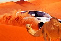 迪拜冲沙 越野冲沙 迪拜旅游自由行迪拜冲沙一日游