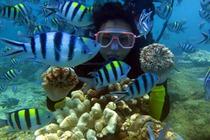 当日可订-亚龙湾-爱琴海度假潜水中心软珊瑚、鱼群多
