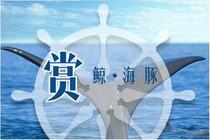 台湾花莲赏鲸鱼,赏海豚,出海鲸豚寻获率高达95%!