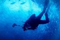 菲律宾 薄荷岛 PADI开放水域潜水ow课程(PADI官方认证)