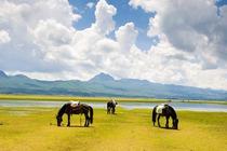 相约云南/拉市海香格里拉5天保险、机场接送服务、衣服、氧气水 住品质酒店