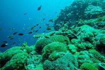 必玩经典!巴厘岛蓝梦岛一日游(紫罗兰号/贝尼达号,多套餐可选)