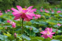 亲近自然,滨海度假之旅1晚日照苏宁诺富特酒店+双早+日照海滨国家森林公园