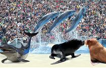 天津极地海洋公园套餐天津美华大酒店入住1晚+2张天津海昌极地海洋公园门票