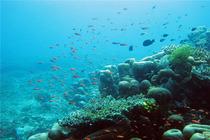 3天2晚 马布岛 婆罗度假村 浮潜深潜配套自由行 马来西亚 沙巴 斗湖