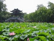 机票+杭州乌镇4日经典自由行|杭州西湖周边酒店2晚+乌镇特色园林酒店1晚