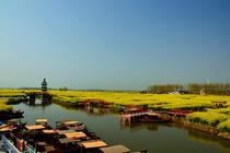 扬州、千岛油菜花、瘦西湖、赠送扬州早茶、纯玩、摄影双卧4日游
