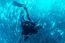 菲律宾薄荷岛 PADI无证体验水肺潜水DSD课程1天1潜(PADI官方认证)