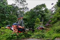 飞速极限体验凯恩斯热带雨林蹦极