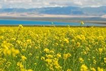 青海湖-祁连-张掖-嘉峪关-敦煌-天山天池-吐鲁番10日品质自助游