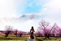 青海湖茶卡-西藏拉萨布达拉宫-林芝雅鲁藏布峡谷-羊湖-纳木措-五星酒店11日