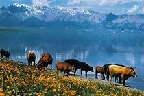 乌鲁木齐-赛里木湖-薰衣草海-那拉提草原-巴音布鲁克-吐鲁番7日自助游