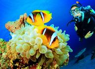 帕劳OW潜水教学课程~平静水域24个技巧+开放水域:1次岸潜,3次船潜~
