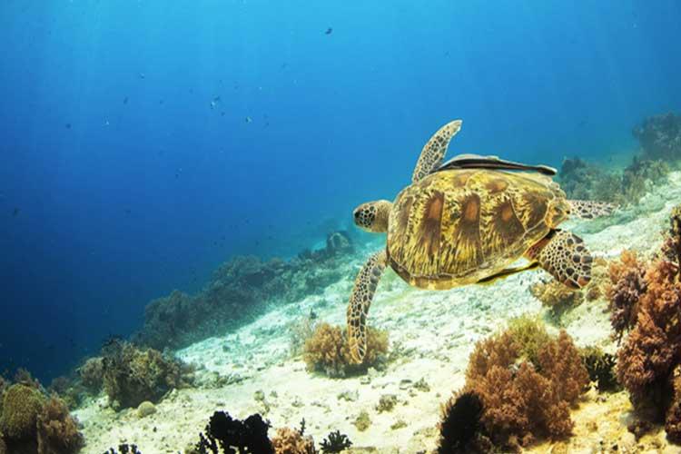 薄荷岛跳岛一日游(海豚湾+巴里卡萨岛+处女岛)海豚大海龟